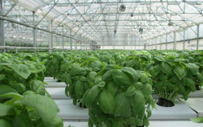 Nawilżanie w rolnictwie