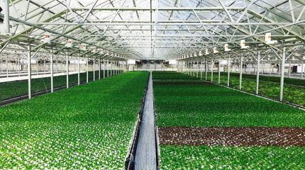 rolnictwo nawilżanie powietrza